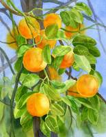 Oranges on a Branch with background