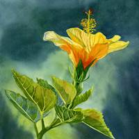 One Yellow Orange Hibiscus Flower with Background