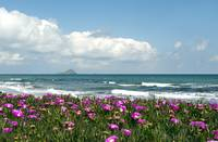 mediterranean sea landscape with blooming beach an