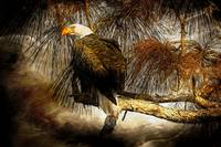 Eagle Painterly