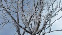 FrostyBranches