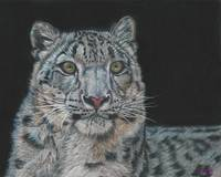 Original drawing snow leopard portrait
