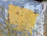Peeling Yellow Paint and Weeds