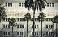 Palm Trees and Abandoned Building, Mare Island