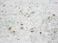 Snow, Grasses, and Leaves