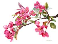 Pink Flowering Tree Blossoms
