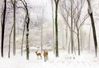 Forest Winter Visitors