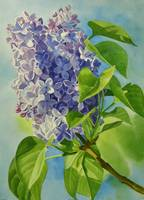 Blue and Lavender Lilacs