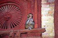 Holy Monkeys Of The Temples