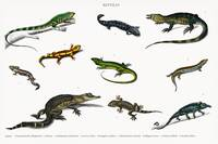 Different types of reptiles illustrated by Charles