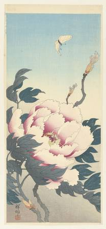Peony with butterfly, Ohara Koson, 1925 - 1936