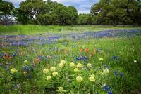 Spring Beauty in Boerne