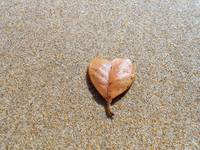 Heart shaped leaf on the beach