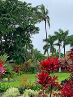 Tropical Plantation Maui Study 1