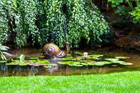 Snail in the Pond