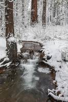 Winter Creek in Forest