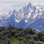 """Grand Tetons with Fencing"" by SSamuelson"