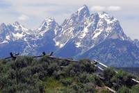 Grand Tetons with Fencing
