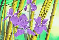 Japanese Iris with Bamboo