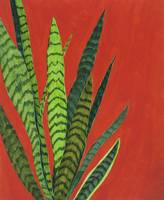 Botanical: Snake Plant on Red
