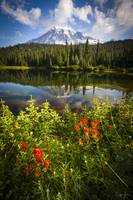 Flowers Mt. Rainier by Cody York_72E0060