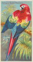 Vintage Illustration of a Macaw Parrot (1889)