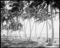 Black and White Florida Palm Trees Photograph (191