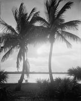 Black & White Palm Trees in The Sunset Photograph