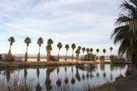 California Lake Lined Palm Tree Photograph