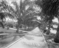 Vintage Black & White Palm Tree Trail Photograph (