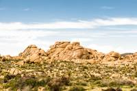Joshua Tree California 7404