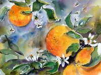 Oranges Bossoms and Bees Watercolors