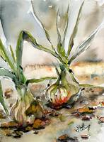 Yellow Onions Watercolors Food Art