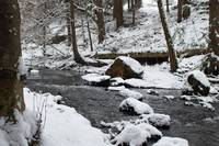 Winter at the creek(2)