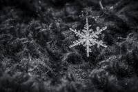 Snowflake by Cody York_15A1187