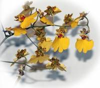 Oncidium Dancing Lady Yellow Orchids