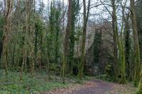 A walk in the Dromore Woods