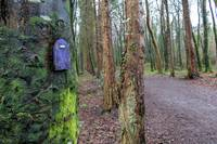 Fairy door in Ballybeg Woods