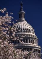 Capitol and Cherry Blossom