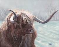 Original oil painting highland bull