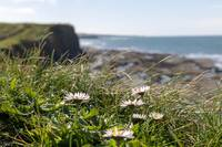 Daisy's on the cliff