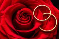 Valentine's Day Red Rose and Rings