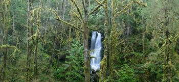 Merriman Falls in Quinault Rain Forest (Med Pano)
