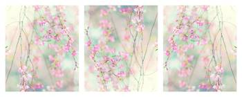 Sweet Cherry Triptych