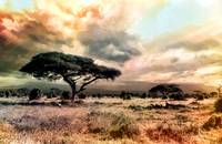 Colors of Nature on the African Plains