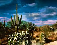 Desert Oasis of Cactus and Brush