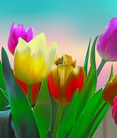 Spring Tulips on Sherbet Colored Sky