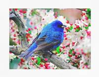 Blue Bird on Cherry Blossoms