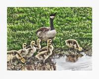Canadian Mother Goose and Her Babies