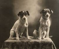 1910 Vintage Two Dogs Rat Terriers Pet Sitting on